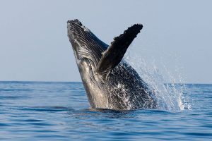 whale-watching-northern-new-south-wales